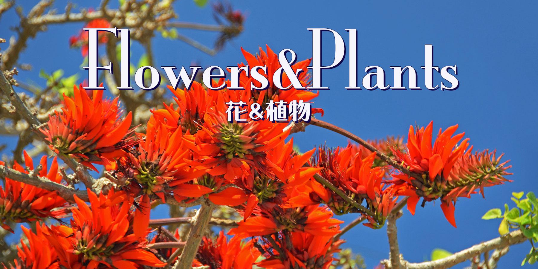 宮古島の花と植物