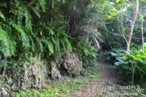 原生林の中の細い道