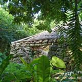 亜熱帯の植物と遺跡