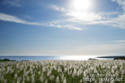 太陽と銀色に輝くサトウキビ畑
