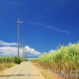 サトウキビ畑と海に続く道