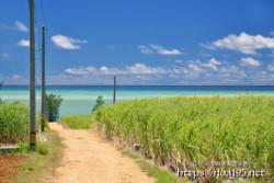 サトウキビ畑の先に広がる海