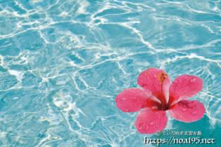 ハイビスカスの花と輝く波紋【