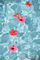 波間に漂うハイビスカスの花