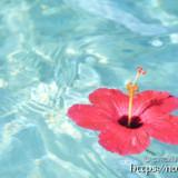 波間を漂うハイビスカスの花