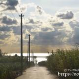 サトウキビ畑の中の一本道と輝く海