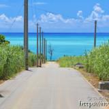 サトウキビ畑の中の一本道と青い海