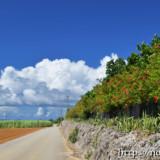 サトウキビ畑の中の一本道