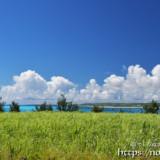 サトウキビ畑と青い海