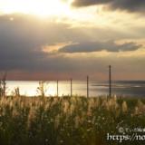 輝くサトウキビの穂と海へ続く道