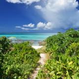 フナクスビーチに続く小道