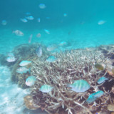 フナクスの水中風景
