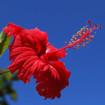 代表的な花
