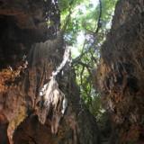 頭上の木々と鍾乳石-ヌドゥクビアブ