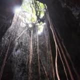 垂れ下がるガジュマルの気根-ヌドゥクビアブ
