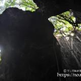 洞窟内に垂れ下がるガジュマルの気根-ヌドゥクビアブ