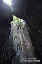 洞窟に垂れ下がるガジュマルの気根-ヌドゥクビアブ