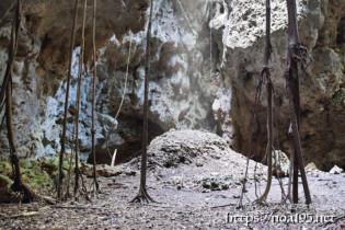サークル状に根を張ったガジュマル-ヌドゥクビアブ