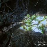 頭上のガジュマルから垂れ下がる気根-ヌドゥクビアブ