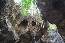 頭上に垂れ下がる植物と鍾乳石-ヌドゥクビアブ
