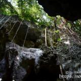 頭上の鍾乳石と植物-ヌドゥクビアブ