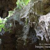 垂れ下がる植物と鍾乳石-ヌドゥクビアブ