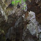 ガジュマルの根と鍾乳石-ヌドゥクビアブ