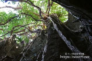 頭上のガジュマルと垂れ下がる気根-ヌドゥクビアブ