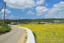 西中・農道脇のヒマワリ畑