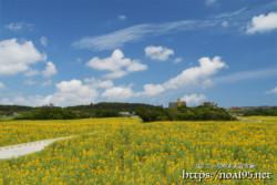 更竹のヒマワリ畑
