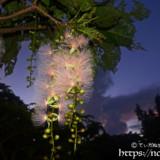 夜明けの空とサガリバナ