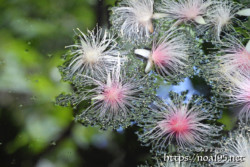 水面に浮かぶ可憐な花