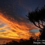 赤く染まる雲とアダンの木