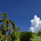 椰子と入道雲