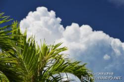 椰子の葉と入道雲