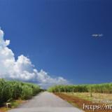 入道雲に向かって行く飛行機