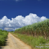 道を横切る入道雲の行列