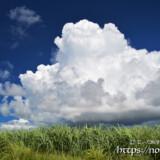 さとうきび畑の巨大な入道雲