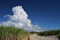 道の先に浮かぶ入道雲