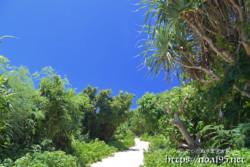 砂山ビーチへ続く小道