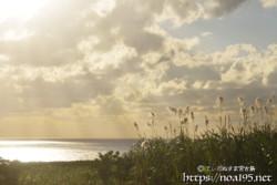 冬のサトウキビ畑と輝く海