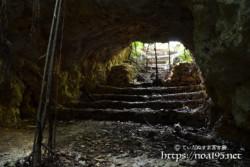 洞窟に根を下ろしたガジュマル-牧山陣地壕