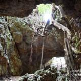 洞窟の出口に根を張るガジュマル-牧山陣地壕