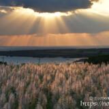 サトウキビの穂を照らす天使の梯子