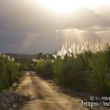 冬のサトウキビ畑に降り注ぐ光のシャワー