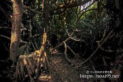三角点の断崖に続く原生林の中の道