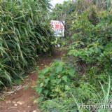 立入禁止の立て札-イグアナ岩-