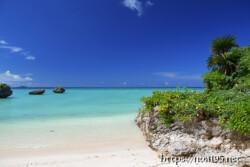 植物の生い茂る岩場と青い海