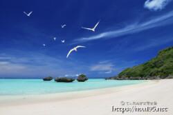 アジサシの舞うビーチ