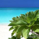 モンパの木と青い海-長間浜-